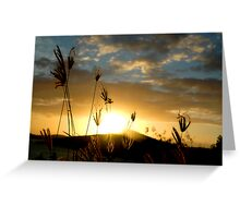 Delicate Grass Greeting Card