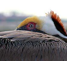 The Pelican Eye by Terra Berlinski
