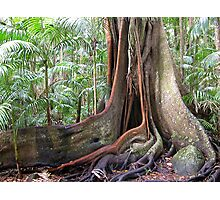 Rainforest Tree Buttress Photographic Print
