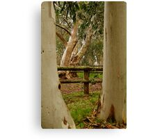 Old Cattle Yard,Davies High Plains.Victorian High Country Canvas Print