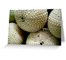 Sea Urchin Greeting Card
