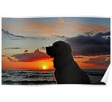 My Golden Retriever Ditte and the sunset Poster