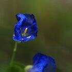 Blue Flowers by Richard Keech