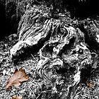 Oak Leaves by John Bromley