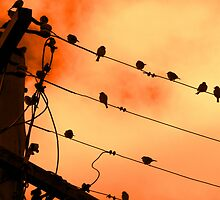 Wired For Sound Armidale New South Wales by Deirdreb