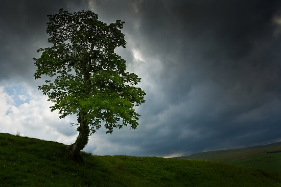 The Lone Tree by David Lewins