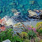 Corniglia Cliffside by Harry Oldmeadow