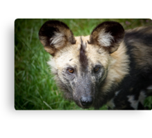 African Hunting Dog ....... Canvas Print