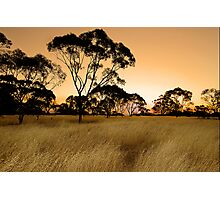 Sunset on the meadow Photographic Print