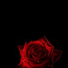 Rose in the dark by Michael Breitung