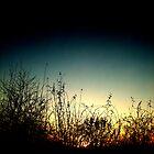 Twilight by miametro