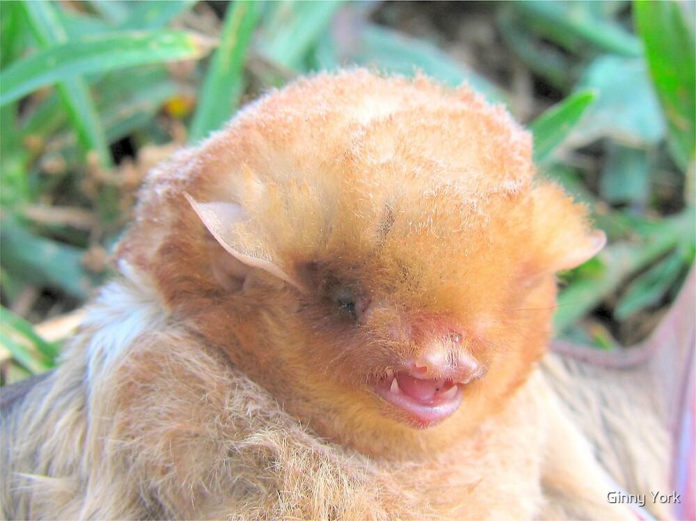 Portrait Of A Bat by Ginny York