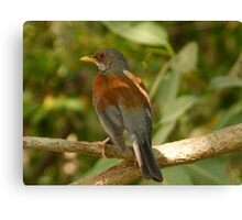 bird - pájaro Canvas Print