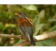 bird - pájaro Photographic Print