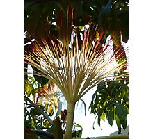 tropical beauty - belleza tropical Photographic Print