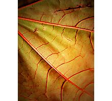 Leaf Abstract- Part 2 Photographic Print