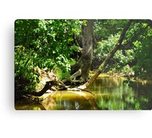 forest and river Metal Print
