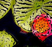 Lily Glow II  /  by Shelley  Stockton Wynn