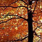 warm autmn leaves by Brandi  Sims