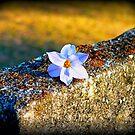 Dead Flowers by Taylor Winn