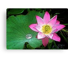 Water Lily Art Series I  / Canvas Print