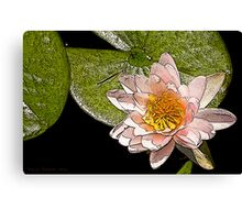 Water Lily Art Series II  /  Canvas Print