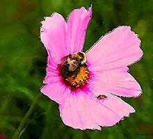 Bumble Bee / Summer / by Shelley  Stockton Wynn