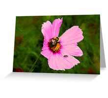 Bumble Bee / Summer / Greeting Card