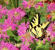 Garden Butterfly I / by Shelley  Stockton Wynn