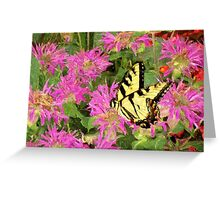 Garden Butterfly I / Greeting Card