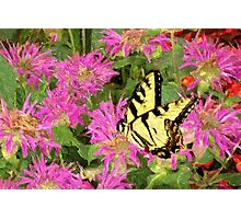 Garden Butterfly I / Photographic Print