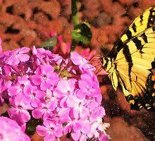 Garden Butterfly II  / by Shelley  Stockton Wynn