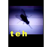 Teh Internet Fly Photographic Print