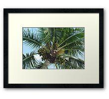 Sable Palmetto Framed Print
