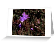 Campanula Patula Greeting Card