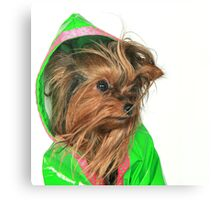 Are you sure Lime Green looks good on me ? Canvas Print