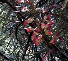 Grevillea and leaves. by Marilyn Baldey