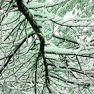 Wintery Blanket by Taylor Winn