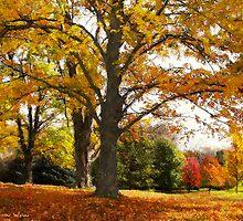 Autumn Afternoon by Shelley  Stockton Wynn