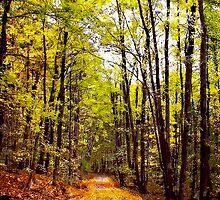 Autumn Country Lane I / by Shelley  Stockton Wynn