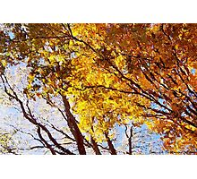 Flaming Trees / Photographic Print