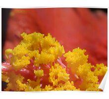Hibuscus pollen Poster