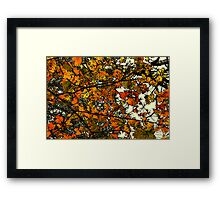 Autumn Gold  / Framed Print