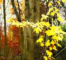 Lone Tree / Autumn in Michigan by Shelley  Stockton Wynn
