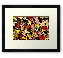 Autumn Pattern  /   Framed Print