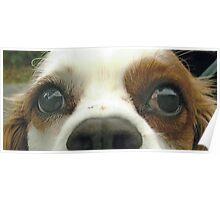 Duffy eyes Poster