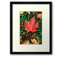 Single Beauty  / Framed Print