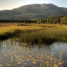 Wetlands by Terence Russell