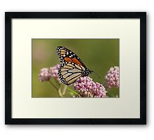 Monarch on Milkweed Framed Print