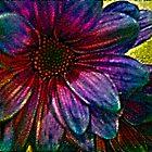 Rainbow Daisy by suzannem73